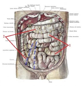 rolfing nyc | psoas aint so major | colon in front of psoas